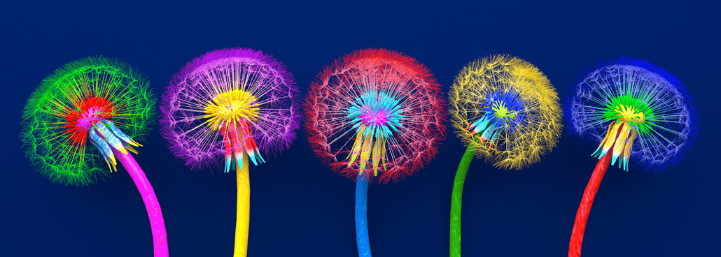 Different color flower heads.