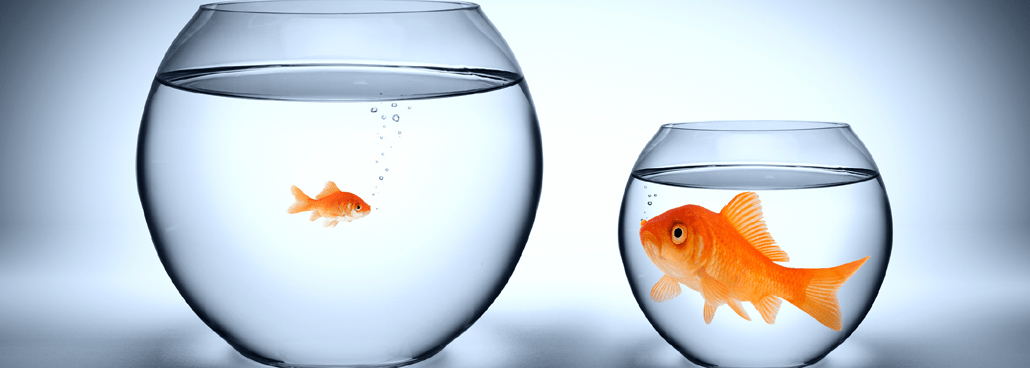 Image of a big fish and a little fish.